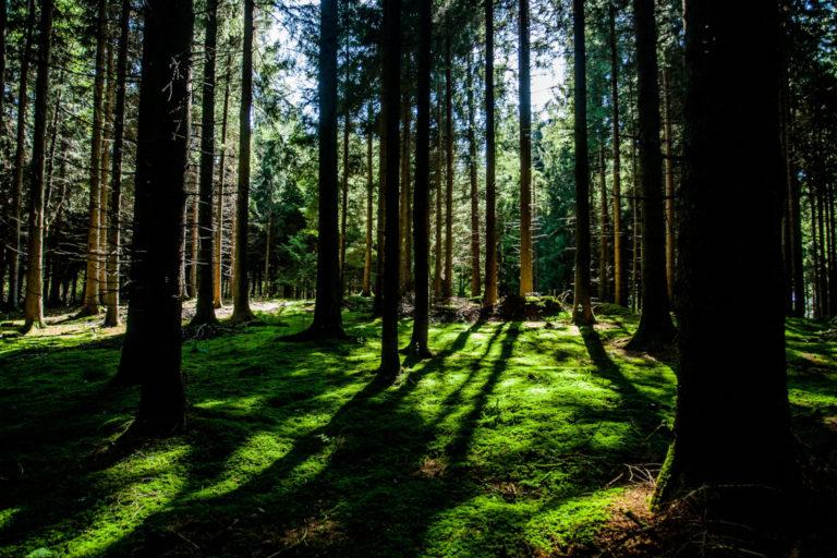 500 miljardin puun istuttaminen tehokkain keino ilmastonmuutokseen